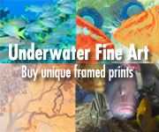 Underwater Fine Art & Photography