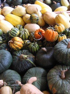 Squash of Different Colors