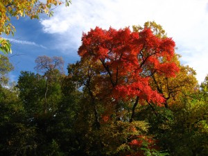 Red Tree in Central Park- original photograph