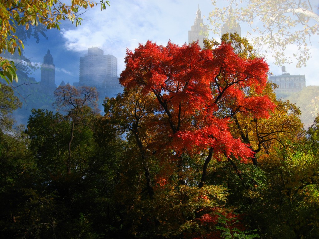 Red Tree in Central Park