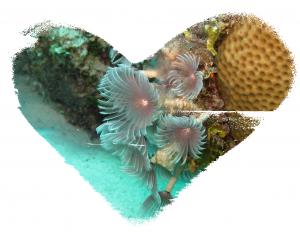 Ocean Valentine Bouquet