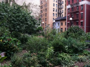 The Lotus Garden, a community on west 97th Street in NYC