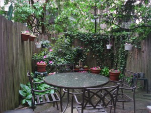 My backyard garden on New York's upper East Side